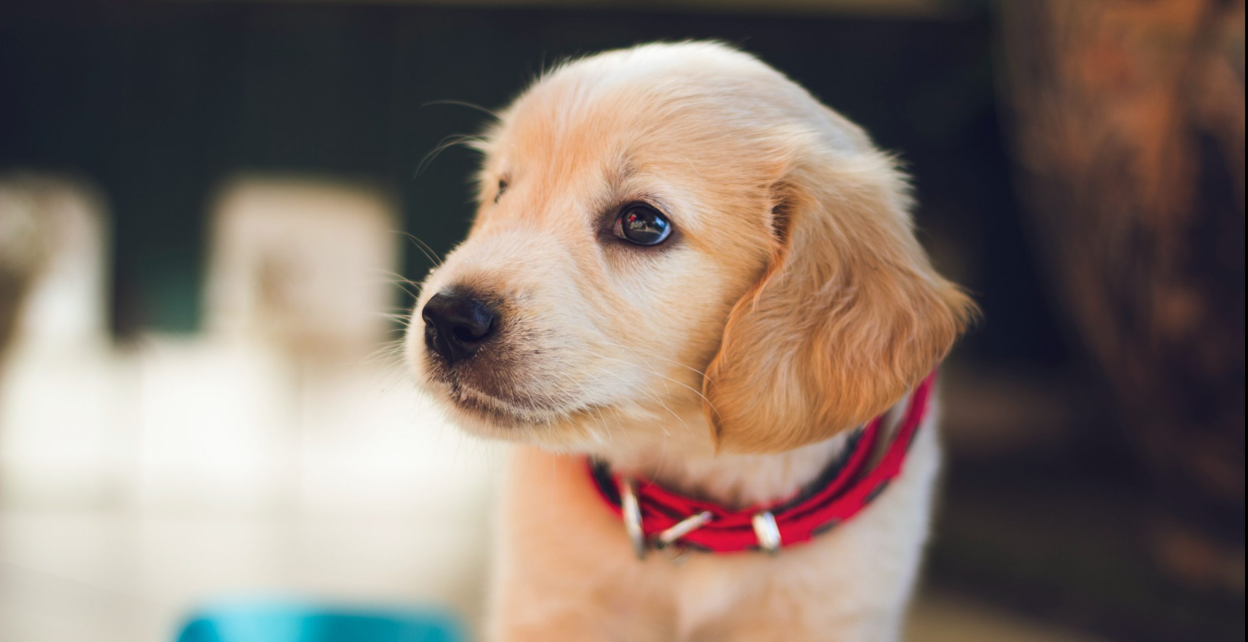 What is a Puppy Dog Close sales technique: definition and tips
